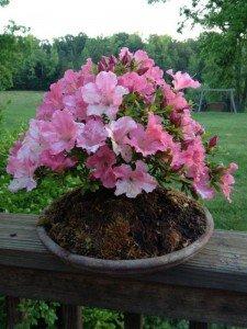 seasonal planting