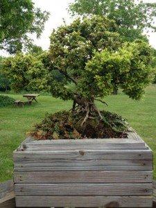 Greenery & Seasonal Planting
